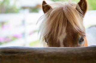 horseback in the berkshires 1.jpg