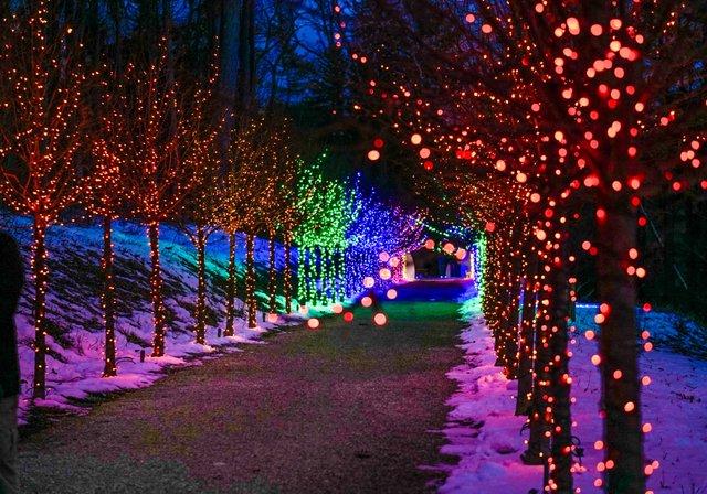 Winterlights at Naumkeag-3.jpg