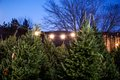 Whitneys Christmas Tree Farm Stand-1.jpg