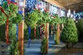 Whitneys Christmas Tree Farm Stand-4.jpg