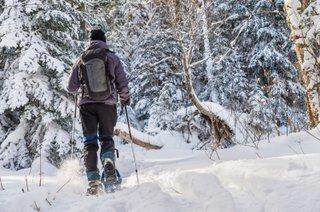 Snowshoe Berkshires