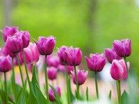 Spring bulbs berkshires.jpg