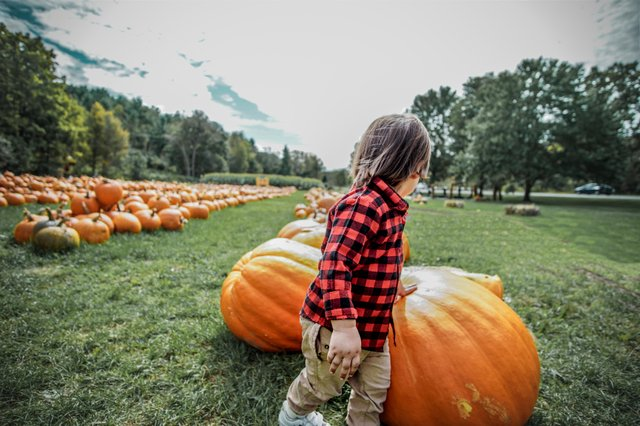 Pumpkin Whitneys Festival.jpg