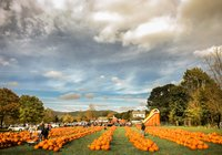 Pumpkin Fest at Whitenys-15.jpg