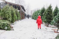 Christmas Trees-2.jpg