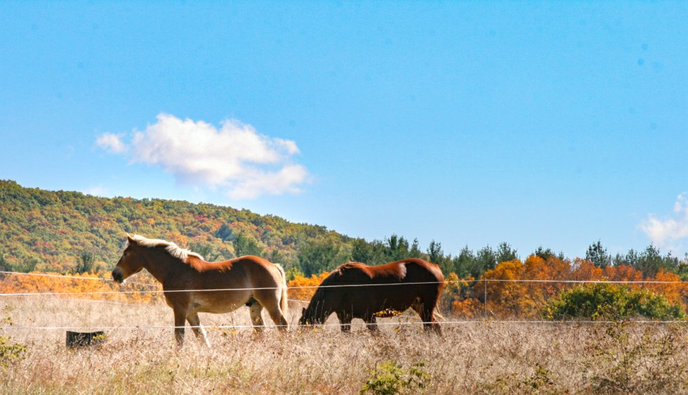 Horseback riding in the berkshires