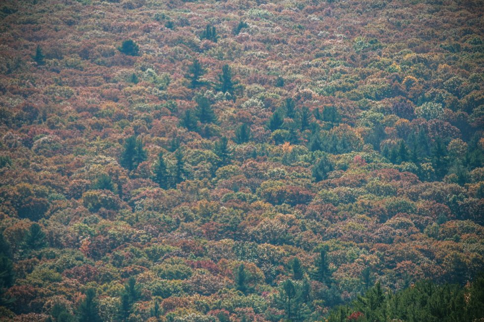 Berkshires Foliage