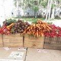 Lenox Ma Farmers Market.jpg