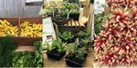 Great Barrington Farmers Market.jpg