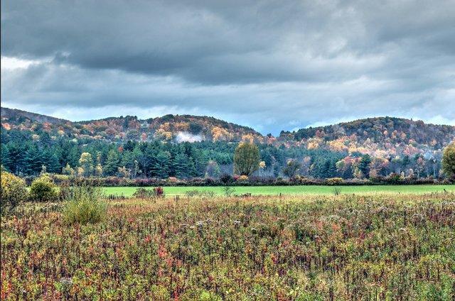 Berkshire hills foliage