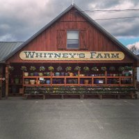 whitneys farm.jpg