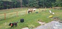 Berkshire Horseworks.jpg