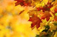 Fall foliage festival berkshires _ com.jpg
