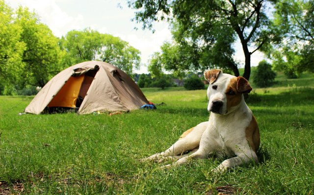 Camping with dog.jpg